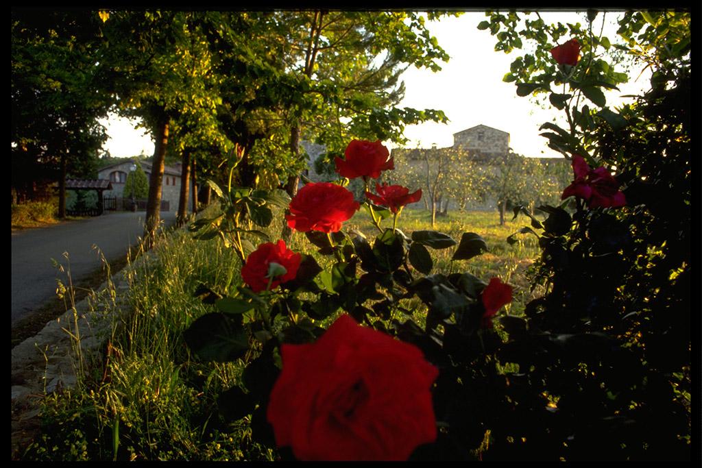 San Sano Italy, Tuscany, Roses - 13th Century building in Italy
