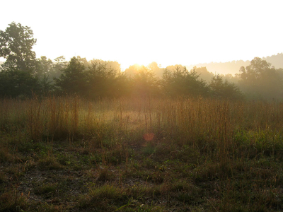 morning light, Bear Paw, West Virginia, country