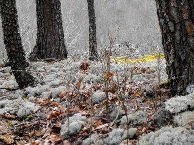 West Virginia, Shale Barrens, Lichen Moss